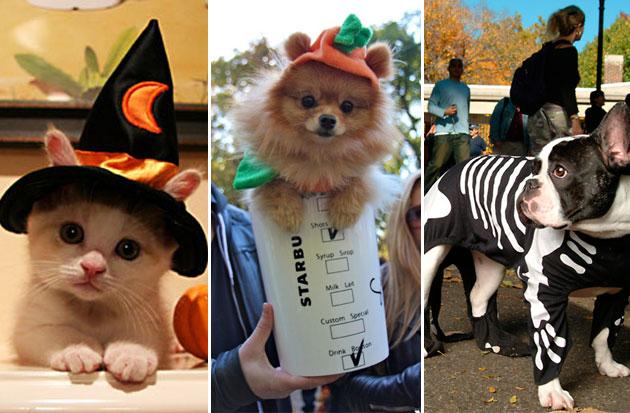 mejores-disfraces-para-animales-halloween-3