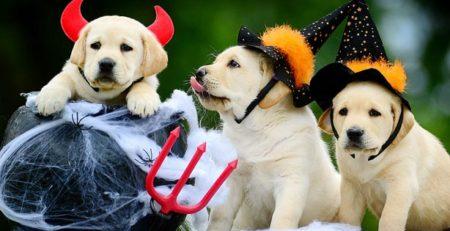 mejores-disfraces-para-animales-halloween-31