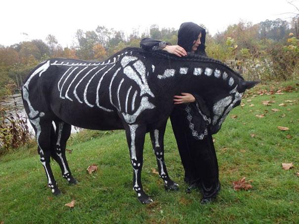 mejores-disfraces-para-animales-halloween-32