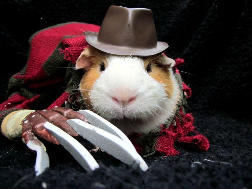mejores-disfraces-para-animales-halloween-33