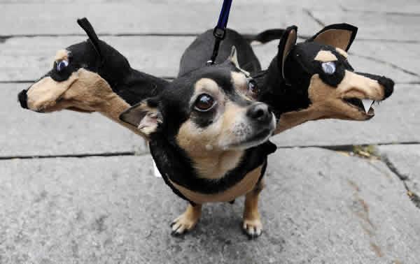 mejores-disfraces-para-animales-halloween-5