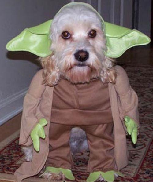 mejores-disfraces-para-animales-halloween-7