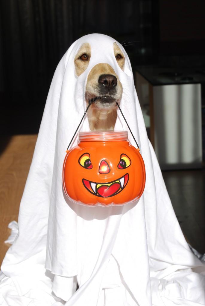 mejores-disfraces-para-animales-halloween-8