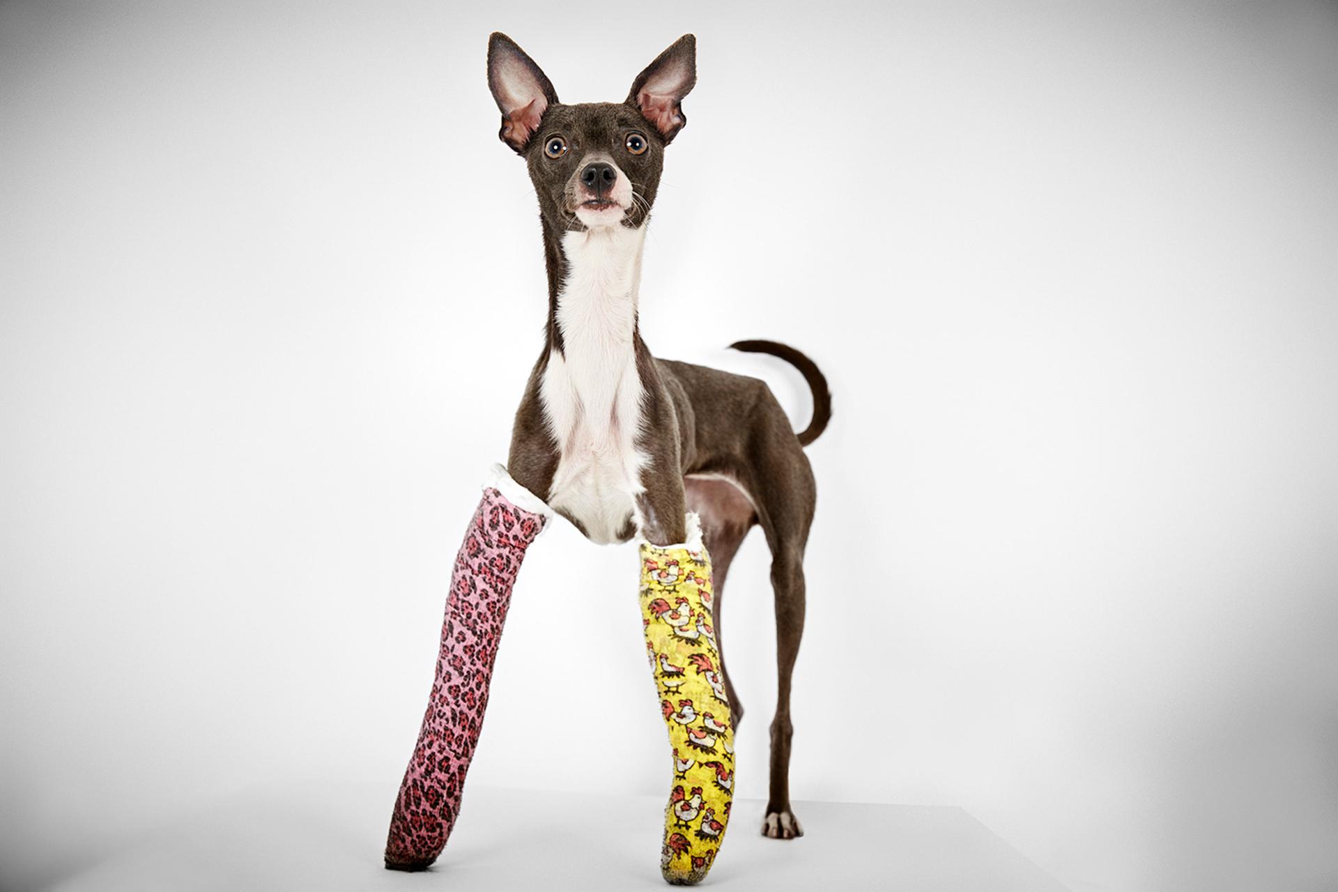 fotografias-perros-rescatados-bromasaparte-3