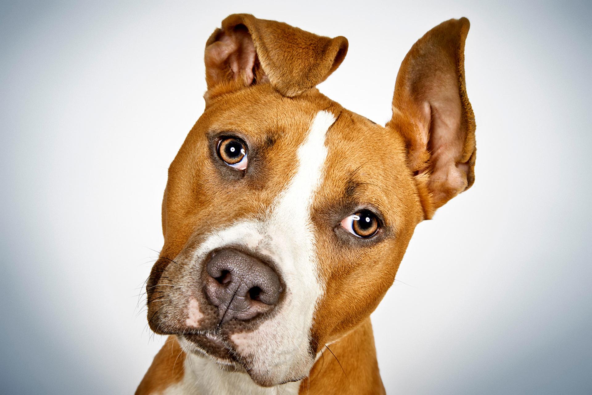 fotografias-perros-rescatados-bromasaparte-4