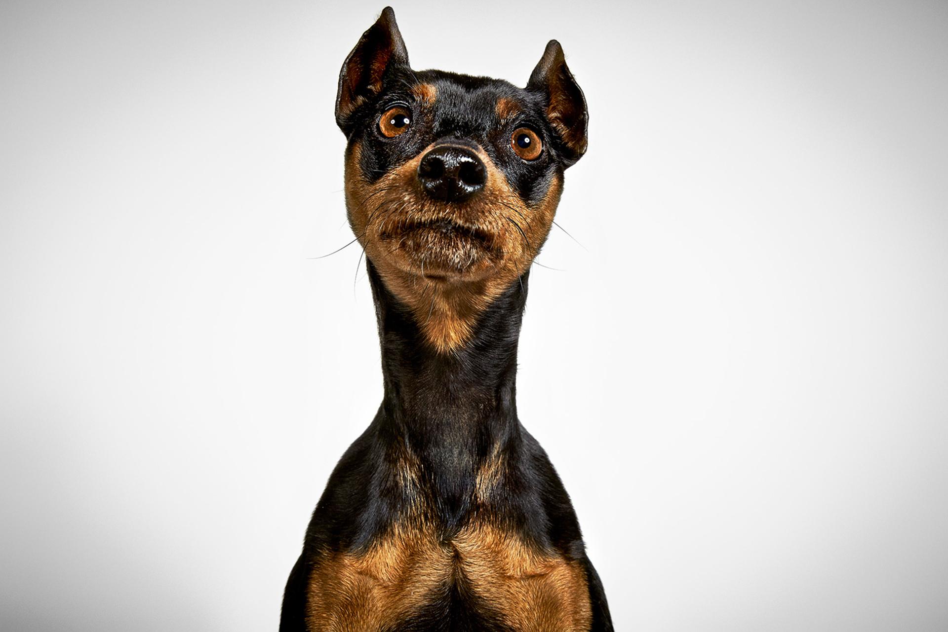 Pampa perdió su casa de la misma manera que lo hicieron muchos perros: su dueño se enfermó y no pudo cuidarlo. Ahora vive con Leslie y su otro Yorkie, Paco, en el Upper East Side de Nueva York. Pampa duerme en los brazos de Leslie como un bebé. Despierto, sin embargo, puede ser un poco travieso. Criada en Argentina, Leslie trajo a casa muchos perros vagabundos